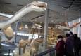 探营自然博物馆新馆:明年二季度开门迎客
