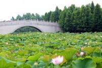上海最新避暑胜地,吃喝玩乐一站式!