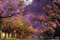 盛放!去上海12大公园赏曼妙紫薇