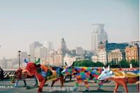 人牛狂欢!上海将迎500头牛!一起牛起来~