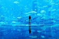 海洋世界哪家强?全球最大极地海洋世界落户上海!