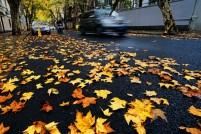 深秋的上海真是美翻了!冬天啊~你能不能晚点再来?