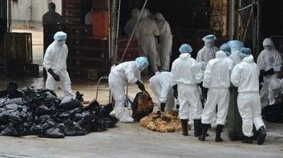 浙江确诊4例人感染H7N9病例 1例死亡