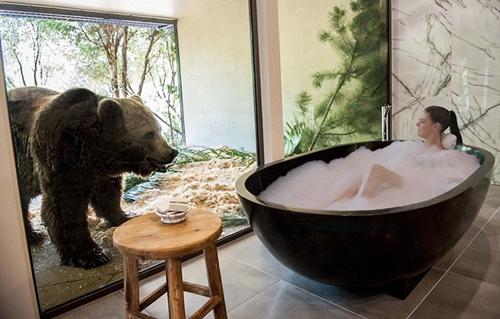 与熊共浴!澳大利亚动物园开旅馆 敢不敢来住一晚?!