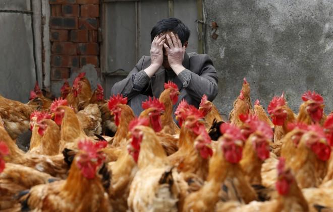 上海发现今年第二例H7N9确诊病例