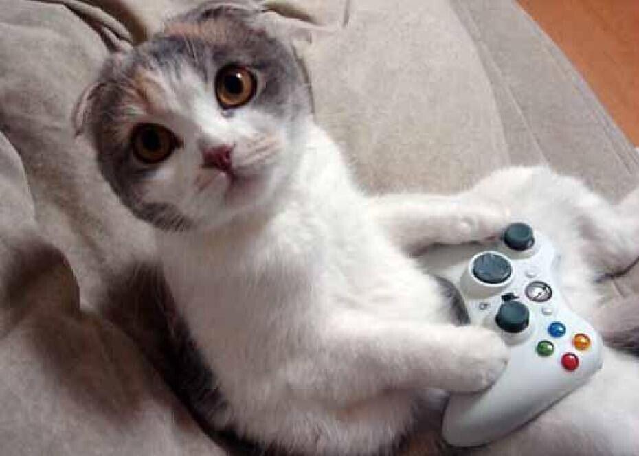 一个喜欢猫的男人_一,你的猫会毫无怨言地听你话痨一整天,而男人不会!