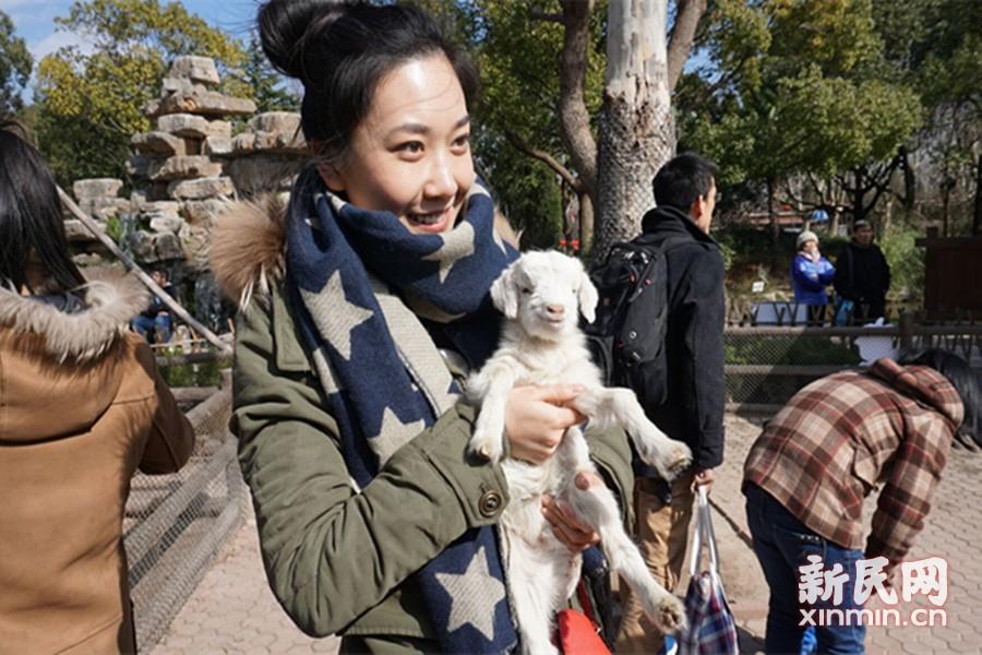 """羊年主角受追捧 游客动物园内围""""羊""""转"""