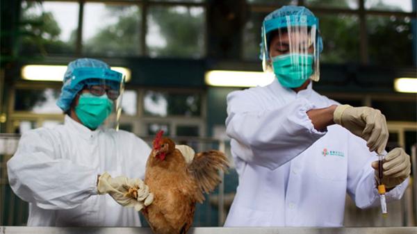 上海新增一例禽流感患者系活禽销售人员