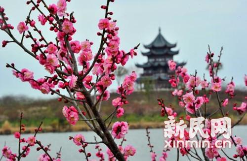 春节不出上海去哪儿玩?城中节日活动精选,按需自取,不谢!