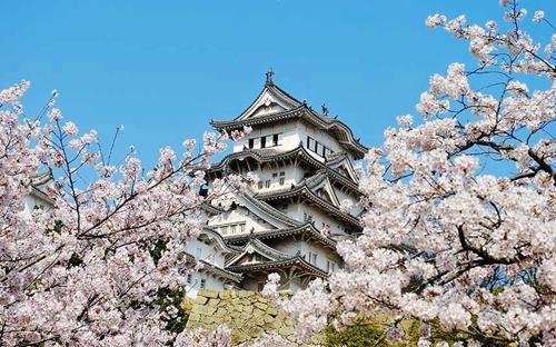 买买买!不足2000元低价航线畅游日本樱花季