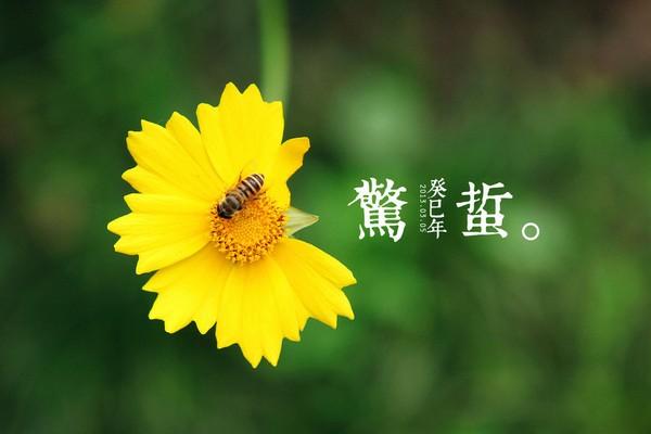 申城今起升温最高11℃ 惊蛰虽至入春还需等等