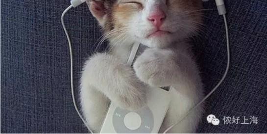 上海小囡不睡觉也要听的电台节目!