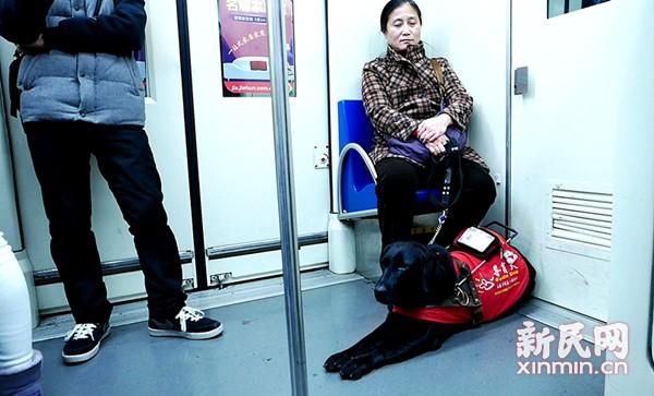 超98%网友支持导盲犬同乘火车 盲人:道歉非目的