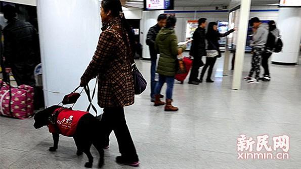 """调查:铁路为何对导盲犬说""""不""""?"""