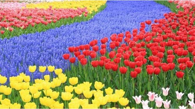春暖花开,我在上海等你!