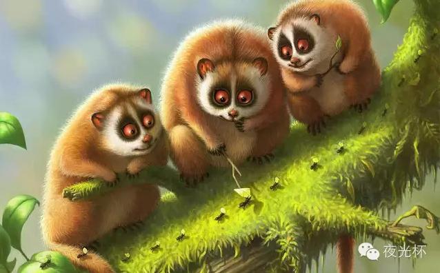 宋毅:浣熊来了