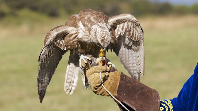 美女子为救鸭子打死猎鹰被控有罪