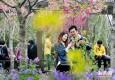 申城进入最美赏花季