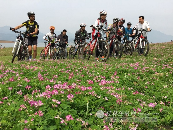 桂林数千亩野生紫云英花海让游客难忘(图)