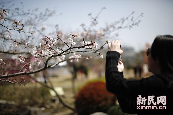 上海(国际)花展本月底绽放上海植物园