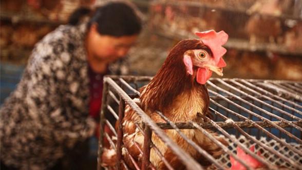 沪中学女生创新课题:采活禽商贩血样防禽流感