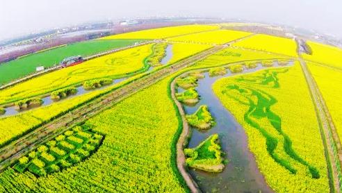上海11处最美的油菜花都在这了 错过要等一年!