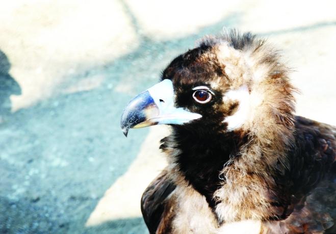 黑龙江有近50个野生动物救护站 捡到小动物可送来