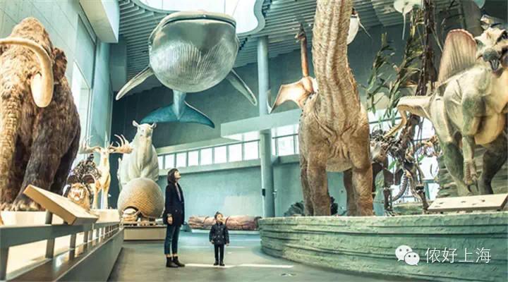 上海自然博物馆开馆啦!