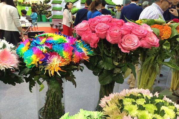国际花卉展登陆申城 萌宠多肉、皇家玫瑰争奇斗艳