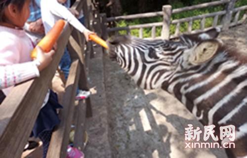 """""""爱我就不要喂我!""""对动物园里的不文明行为说""""不"""""""