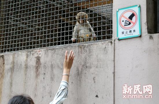 """图说:尽管许多动物笼舍旁有明显的""""禁止喂食""""标志"""