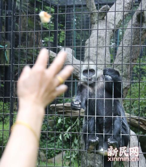 图说:游客正在向动物扔抛食物.新民晚报 周馨 摄