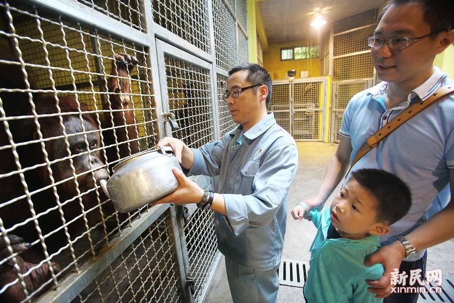 此前,上海动物园3只原本健康活泼的黄黇鹿,均因游客的乱喂食接连死亡。为此,新民晚报征集选取了两对读者家庭,到上海动物园亲身体验了解,如何科学地给小动物喂食。新民晚报 周馨摄