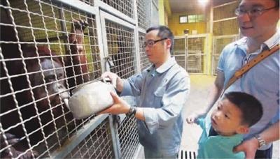 """""""动物应该这样喂!""""看上海动物园的小小饲养员"""