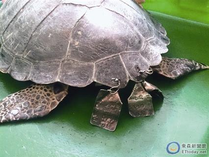 放生龟被龟甲洞穿合家挂着名牌平安铁牌(图情趣用给我女朋友图片