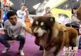亚洲宠物展再登申城 阿拉伯土豪宠猫将神秘现身