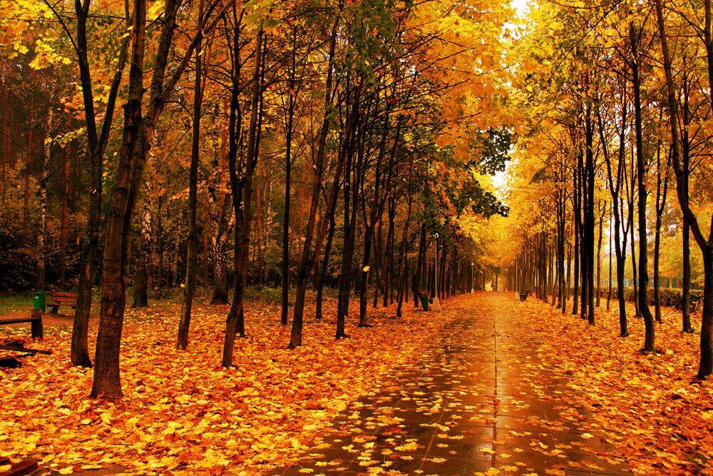 秋天风景图片大全大图_秋天山水风景图片