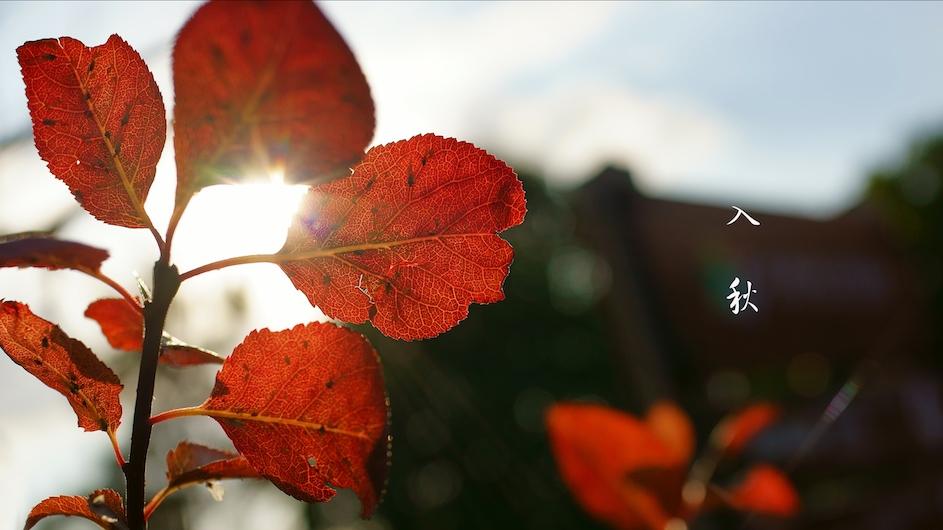 再见!上海10月8日已正式入秋 今年夏天132天