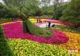 共青森林公园菊花展开幕 800多个品种共争艳
