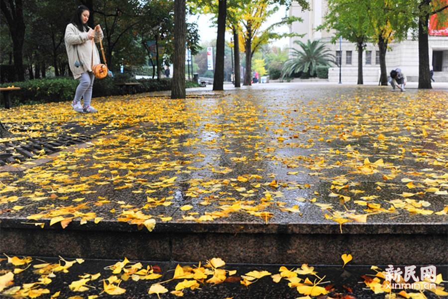 落叶不扫,秋景斑斓