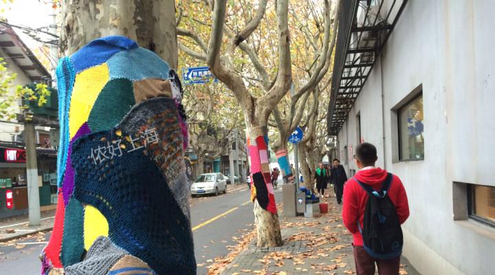 好有爱!上海街头的梧桐树居然穿上毛衣了!