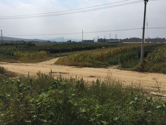 """营口熊岳镇政府被指""""设局""""两千万土地出让金去向成谜"""