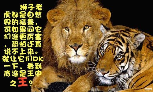 做梦梦到老虎和狮子_狮子老虎谁厉害?