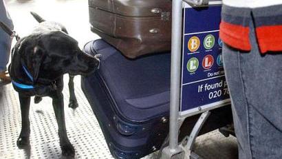英国王牌嗅钱犬:5年截获千万英镑