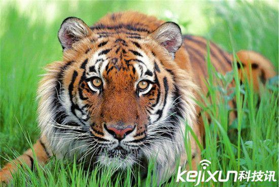 动物世界十大最美动物:没想到它也入选了-动物
