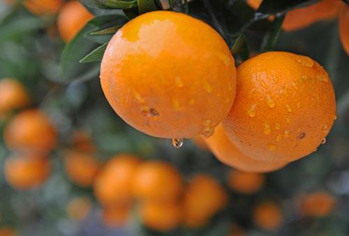 柑橘家族里的5大营养高手