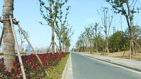 迪士尼园外景观大道竣工 未来将变林荫大道