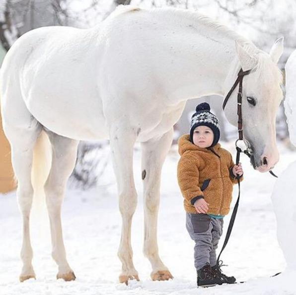 童水彩笔画动物马