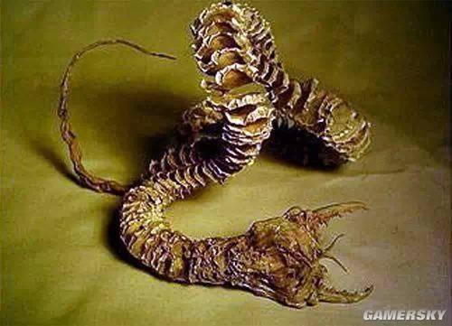 世界最罕见最奇特的异型生物