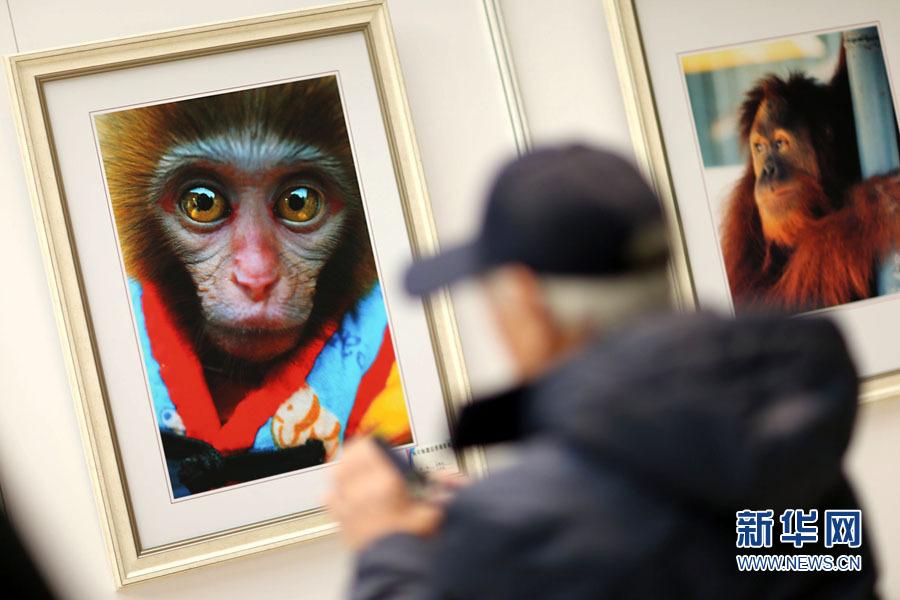 天津:猴年猴趣狐狸摄影展开幕肚兜孟图片情趣主题图片